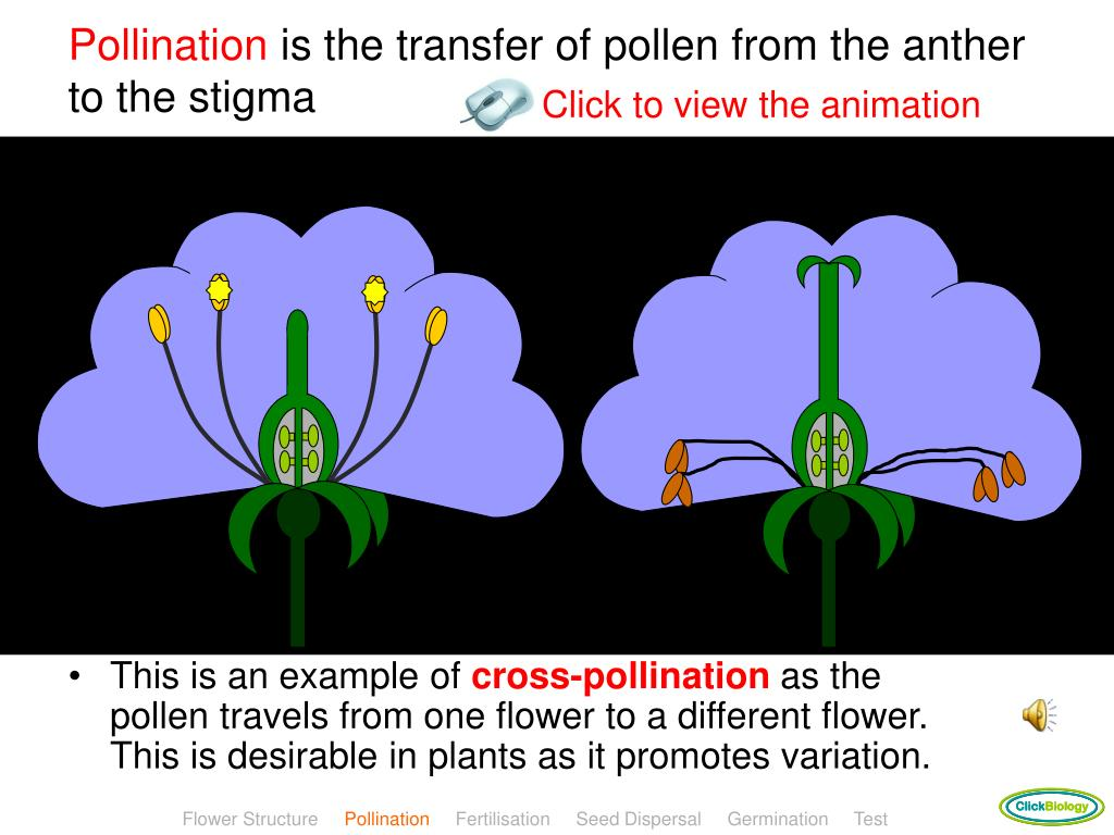 Pollinators discriminate among floral heights of a sexually deceptive orchid