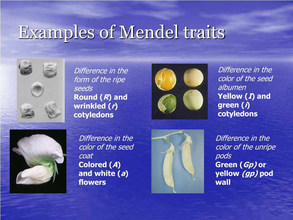 Examples of Mendel traits