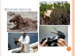 wildlife rescues