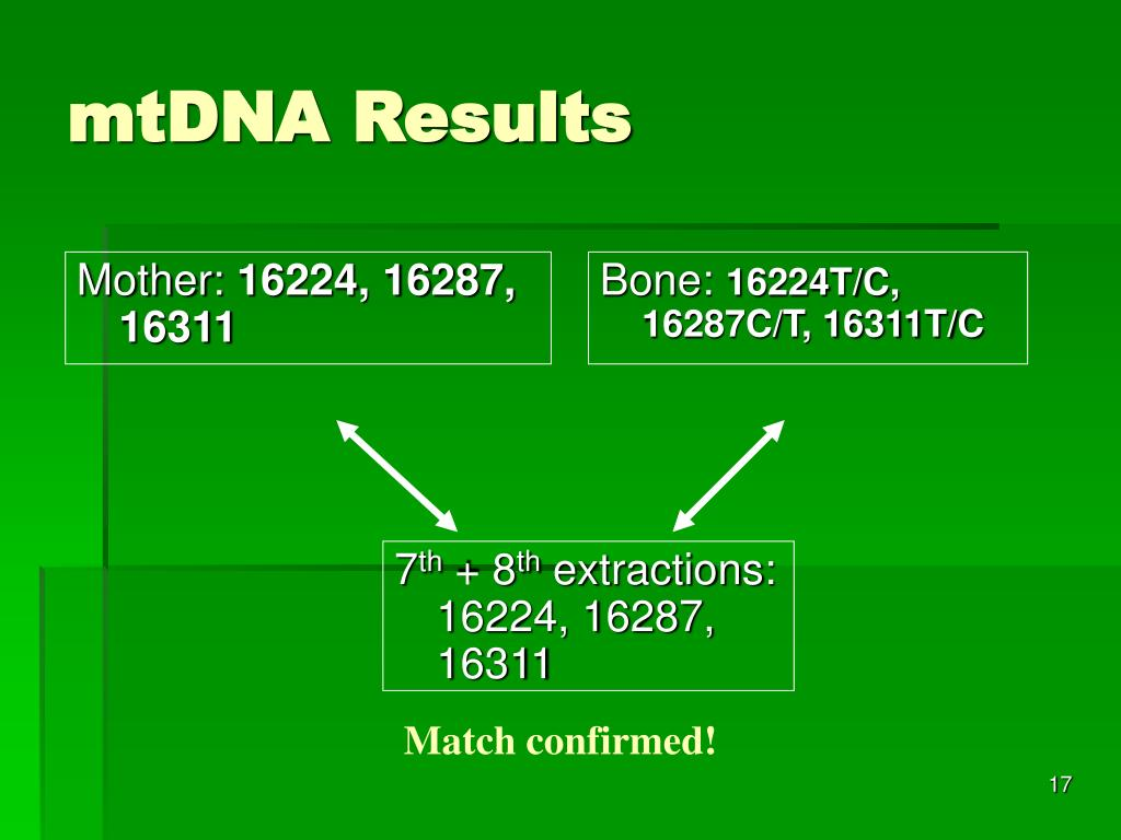 mtDNA Results