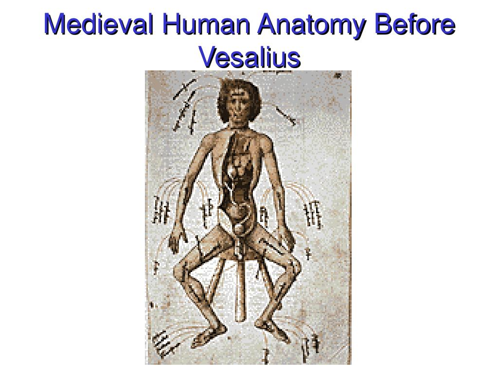 Medieval Human Anatomy Before Vesalius