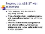 muscles that assist with respiration51