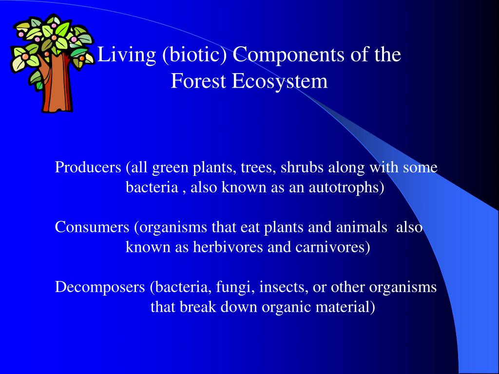 Living (biotic) Components of the             Forest Ecosystem