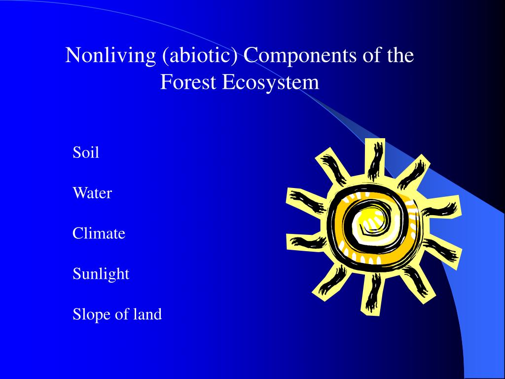 Nonliving (abiotic) Components of the Forest Ecosystem