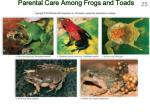 parental care among frogs and toads