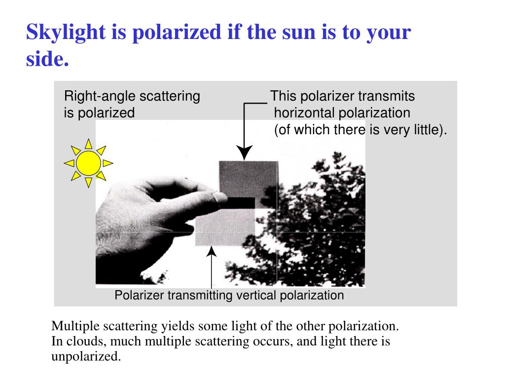 Skylight is polarized if the sun is to your side.