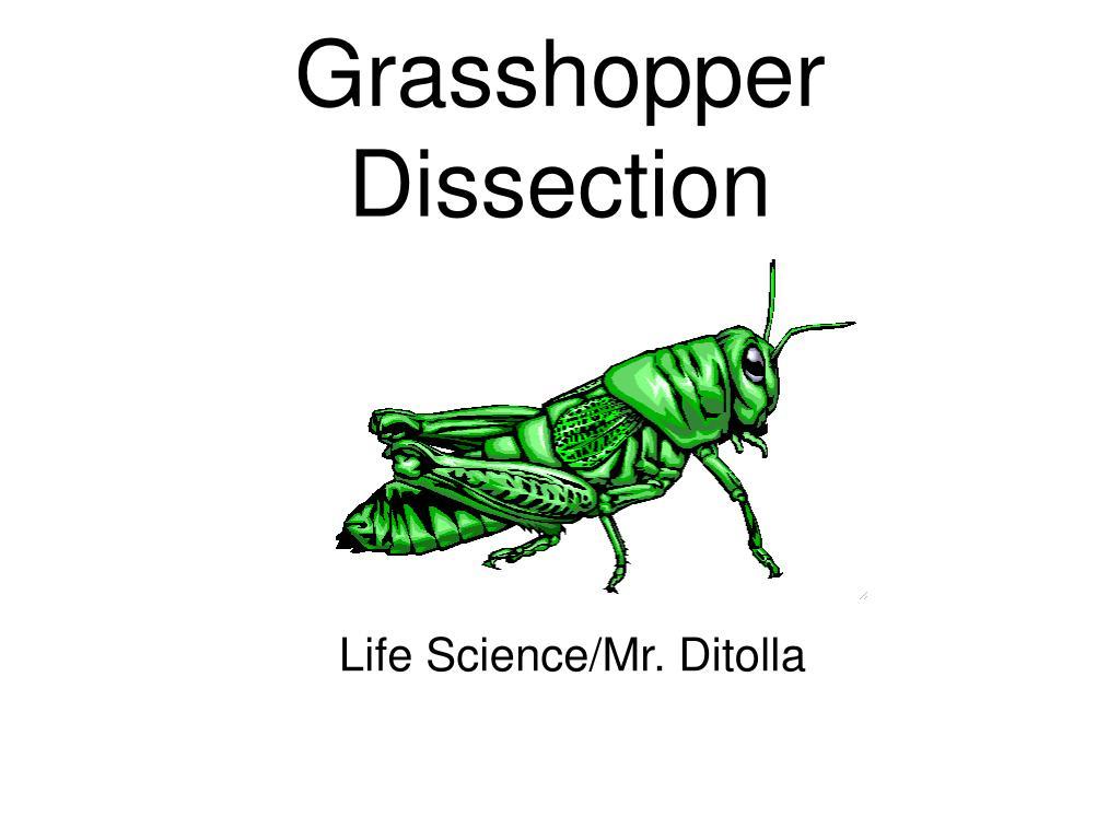 PPT - Grasshopper Dissection PowerPoint Presentation - ID:268828