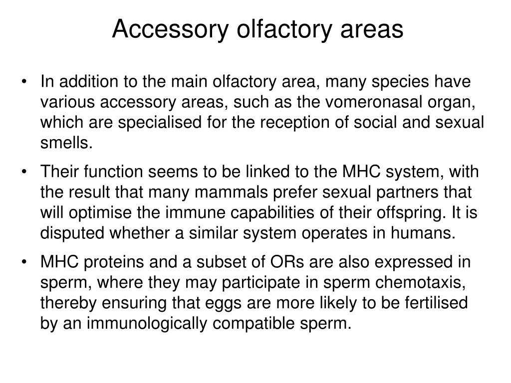 Accessory olfactory areas