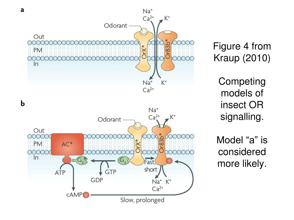 Figure 4 from Kraup (2010)