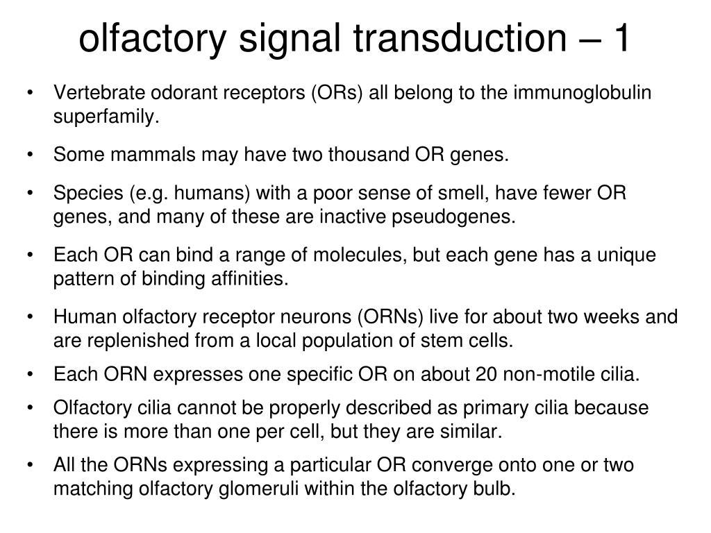 olfactory signal transduction – 1