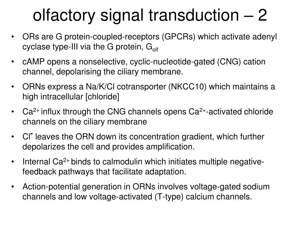 olfactory signal transduction – 2