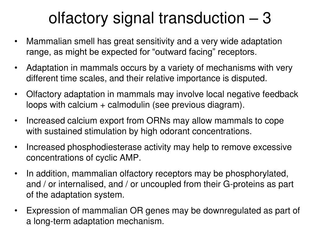 olfactory signal transduction – 3