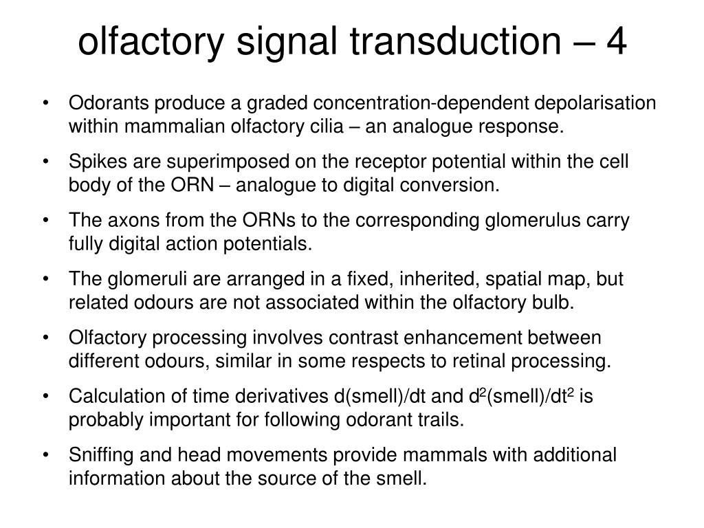 olfactory signal transduction – 4