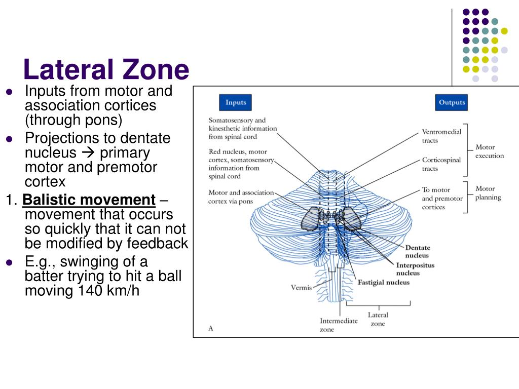 Lateral Zone