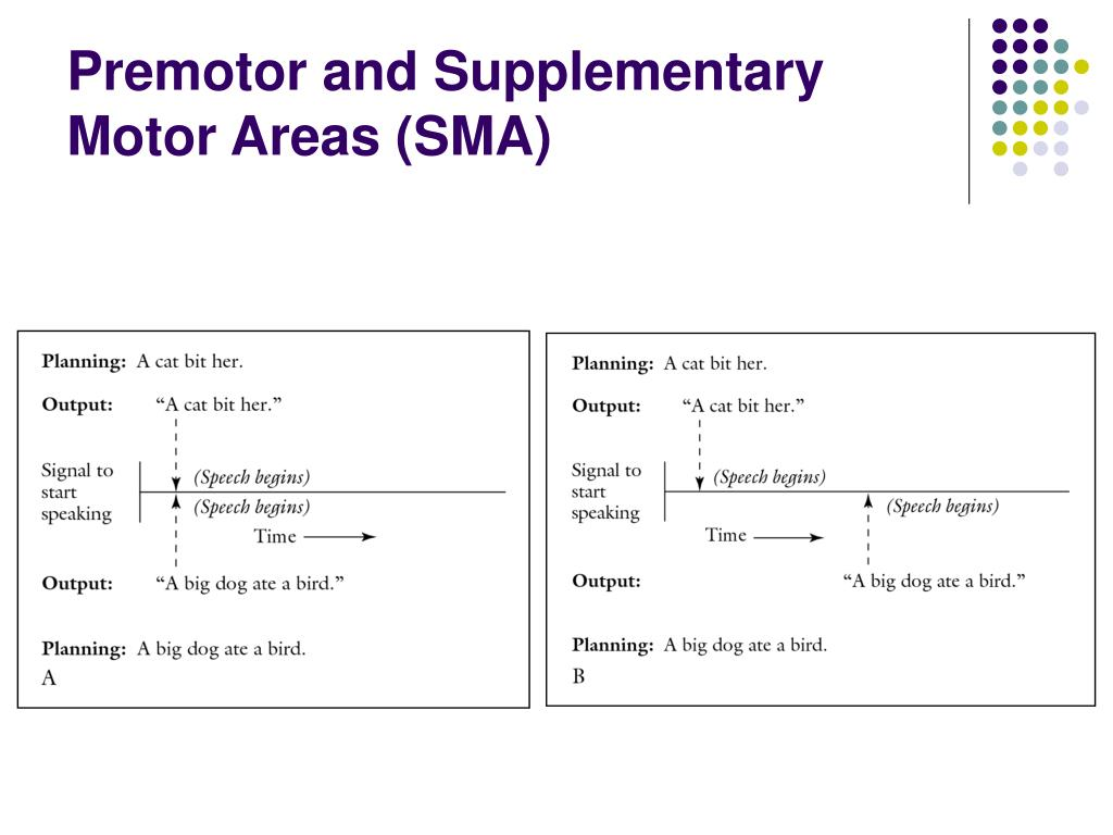 Premotor and Supplementary Motor Areas (SMA)