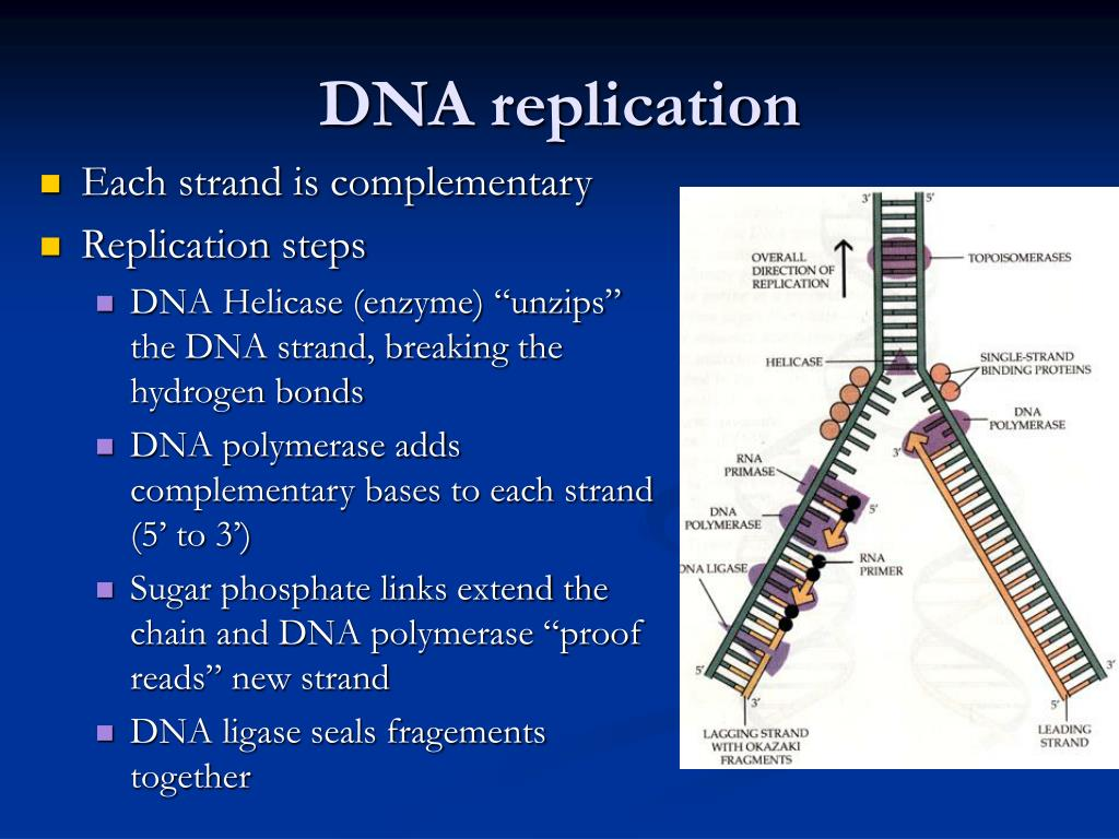 Ppt - Molecular Basis Of Genetics And Biotechnology Powerpoint Presentation