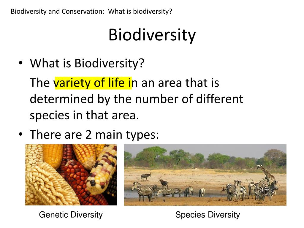Biodiversity and Conservation:  What is biodiversity?