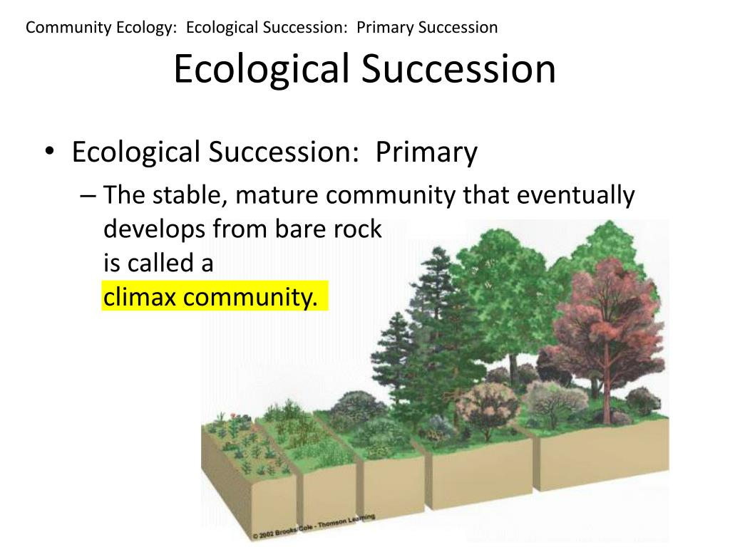 Community Ecology:  Ecological Succession:  Primary Succession