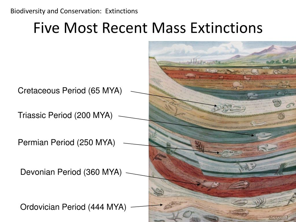 Biodiversity and Conservation:  Extinctions