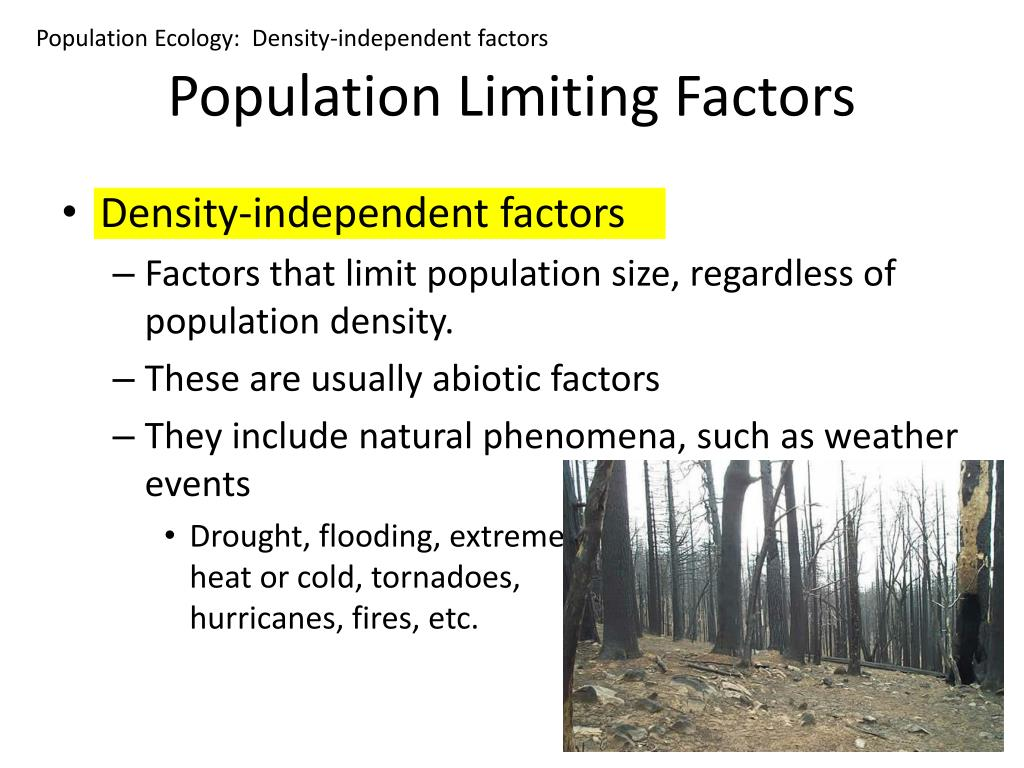 Population Ecology:  Density-independent factors