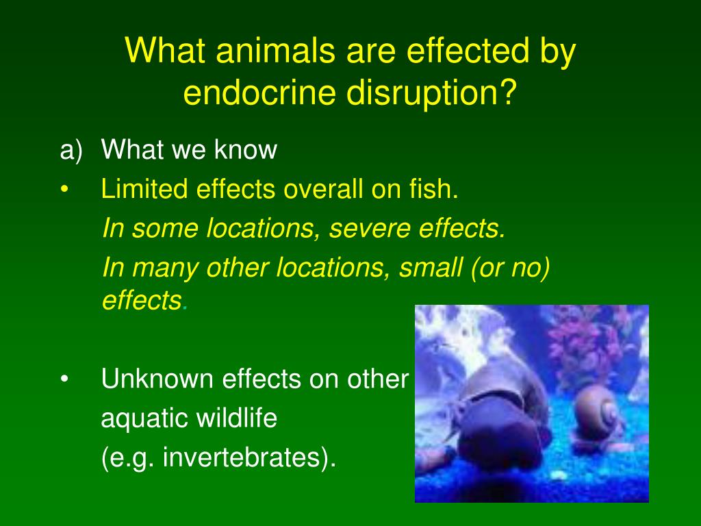 What animals are effected by endocrine disruption?