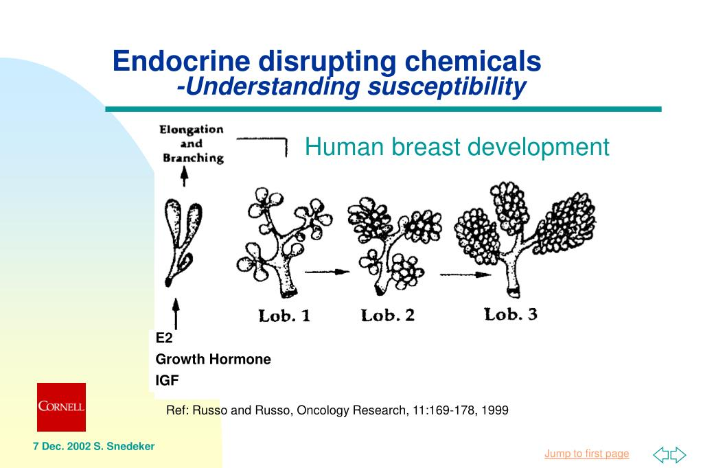 Endocrine disrupting chemicals