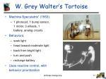 w grey walter s tortoise