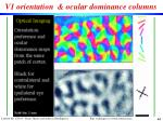 v1 orientation ocular dominance columns