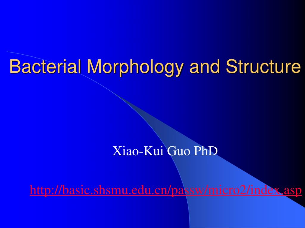 bacterial morphology and structure l.