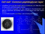 cell wall common peptidoglycan layer