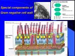 special components of gram negative cell wall