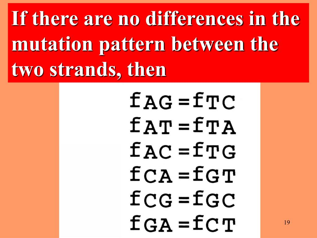 If there are no differences in the mutation pattern between the two strands, then