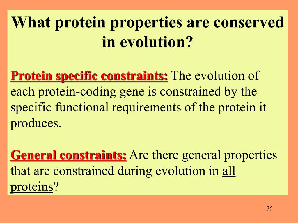 What protein properties are conserved in evolution?