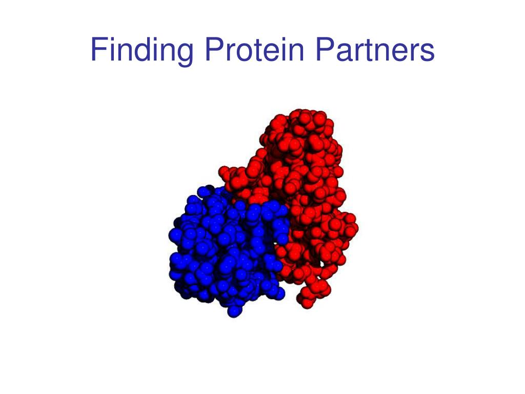 Finding Protein Partners