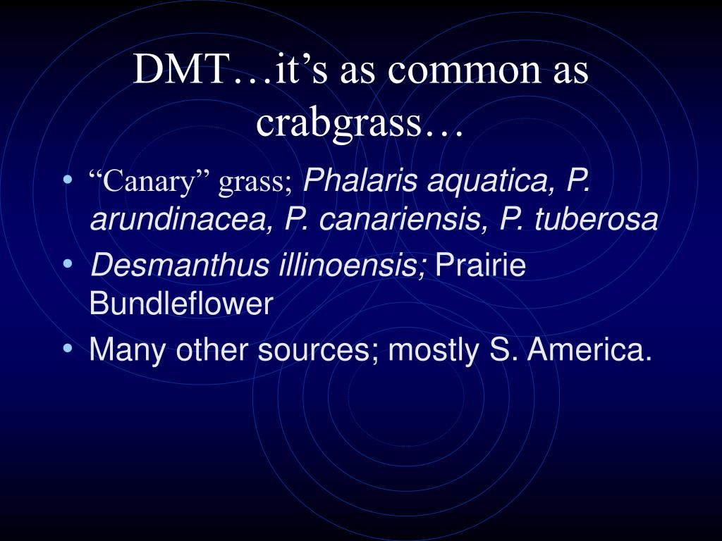 DMT…it's as common as crabgrass…