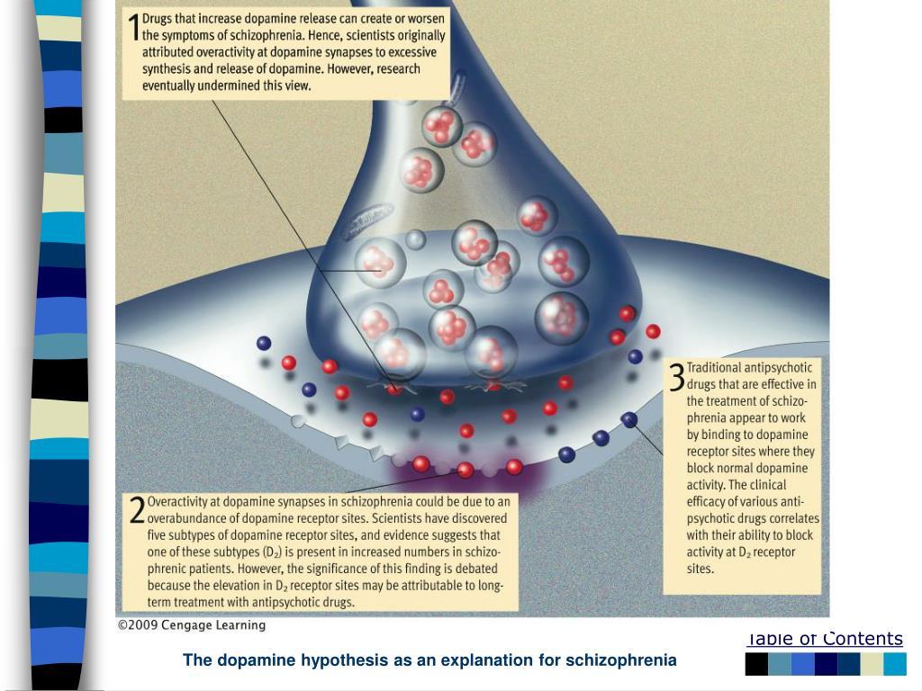 The dopamine hypothesis as an explanation for schizophrenia