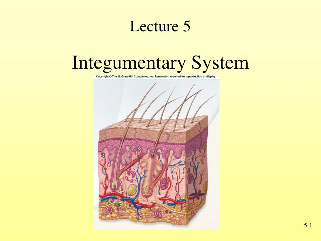Ppt Lecture 5 Powerpoint Presentation Id269911
