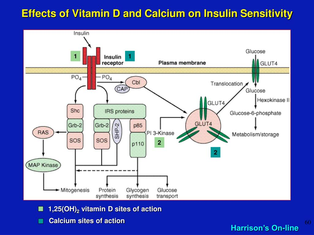 Effects of Vitamin D and Calcium on Insulin Sensitivity