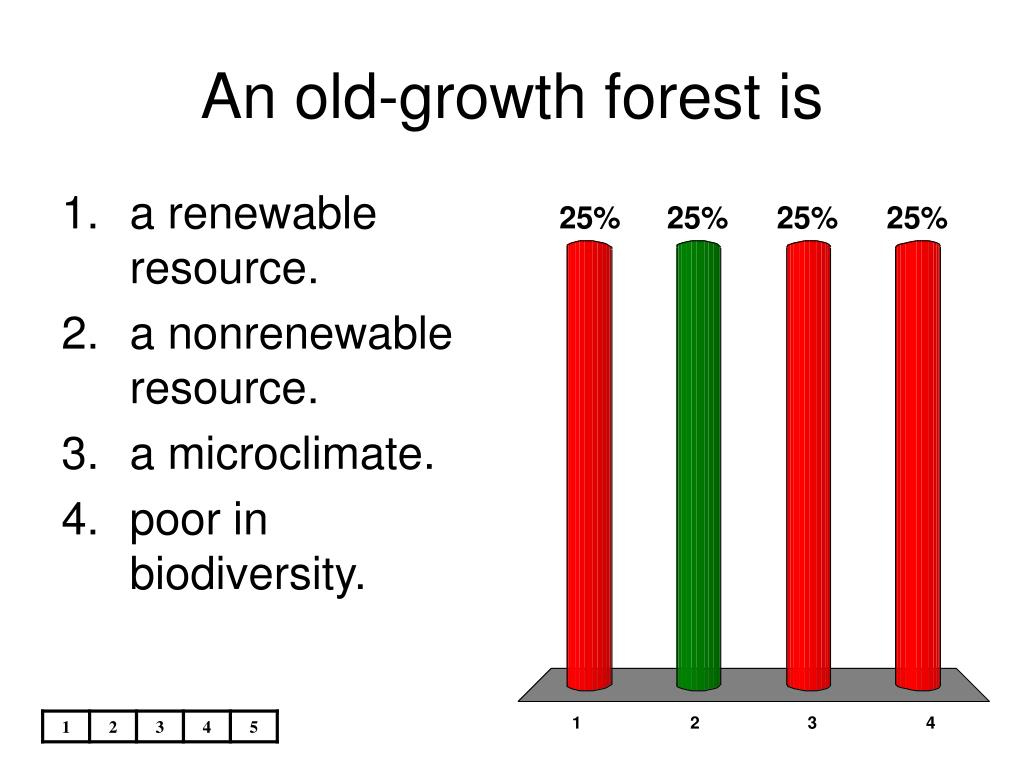 An old-growth forest is