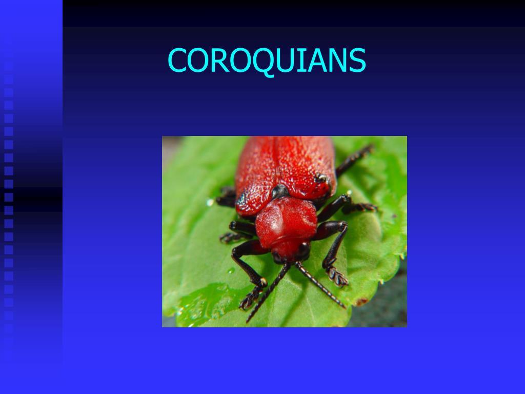 COROQUIANS