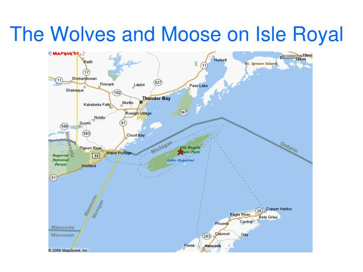 the wolves and moose on isle royal n.