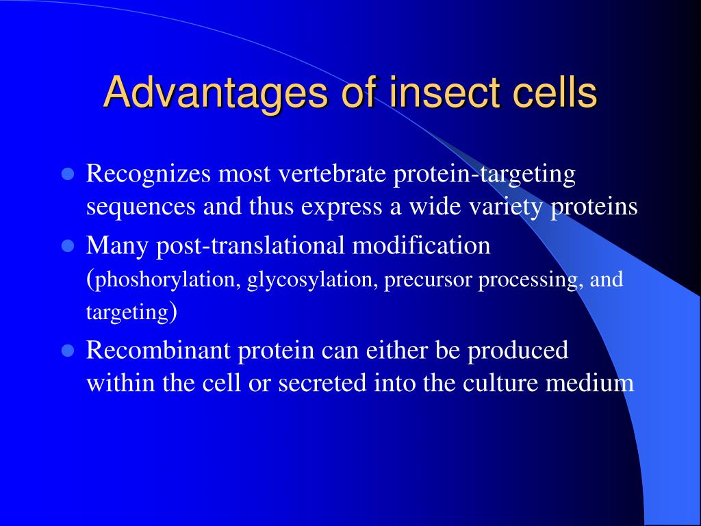 Advantages of insect cells