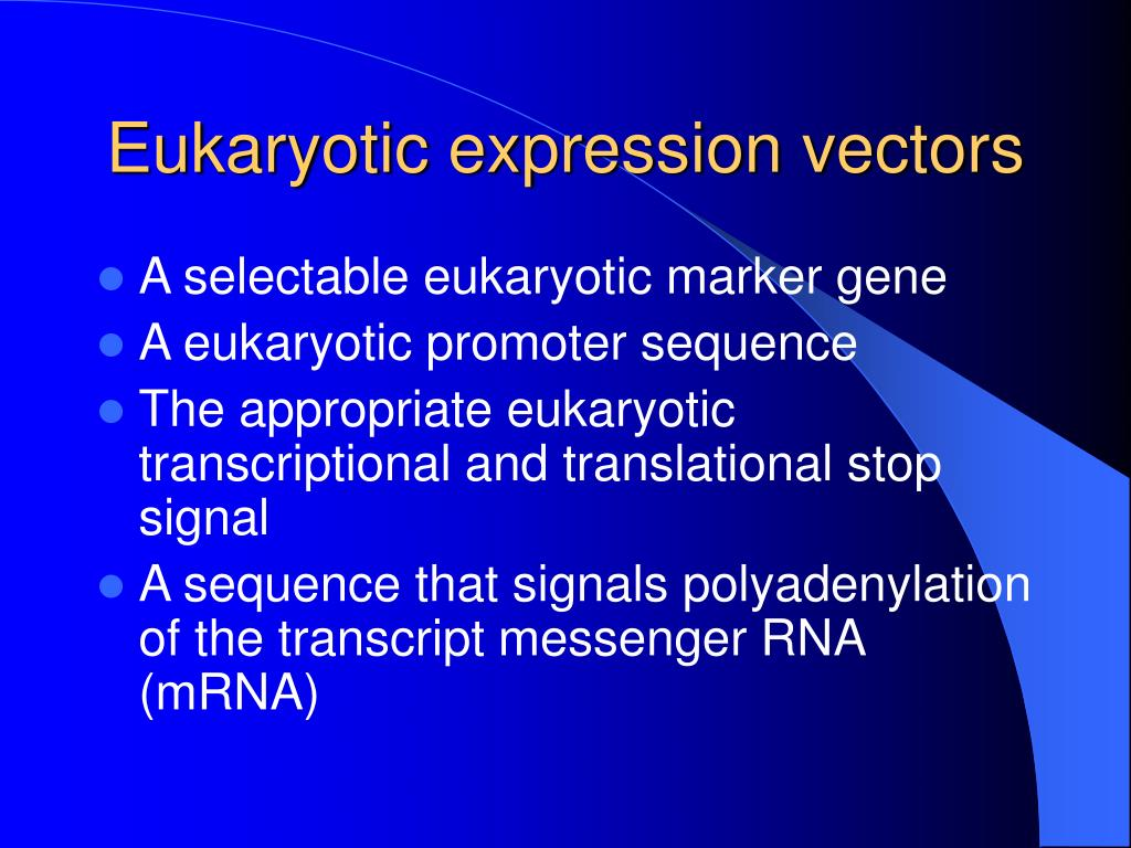 Eukaryotic expression vectors