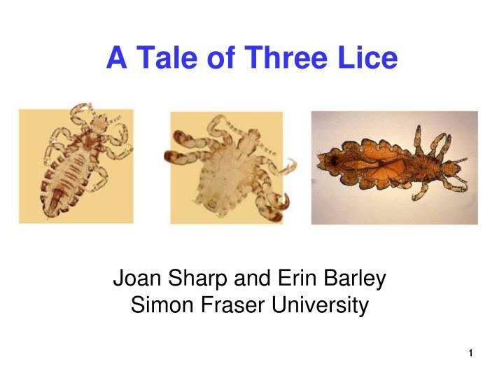 a tale of three lice n.