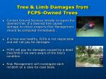 tree limb damages from fcps owned trees