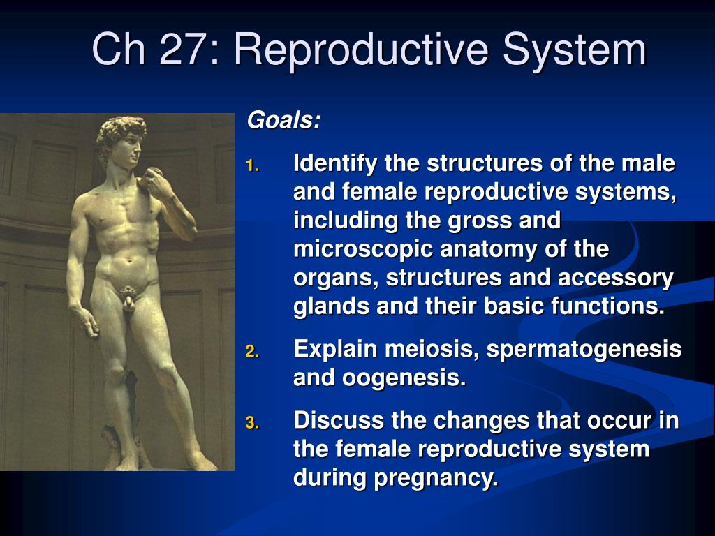 ch 27 reproductive system l.