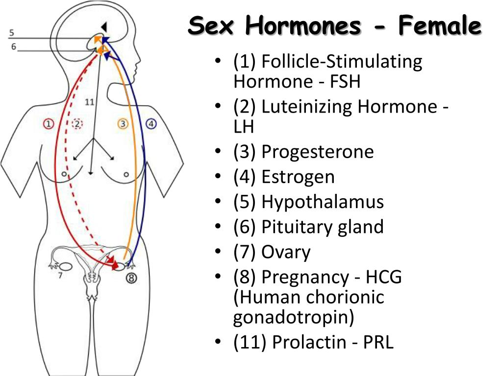 Sex Hormones - Female
