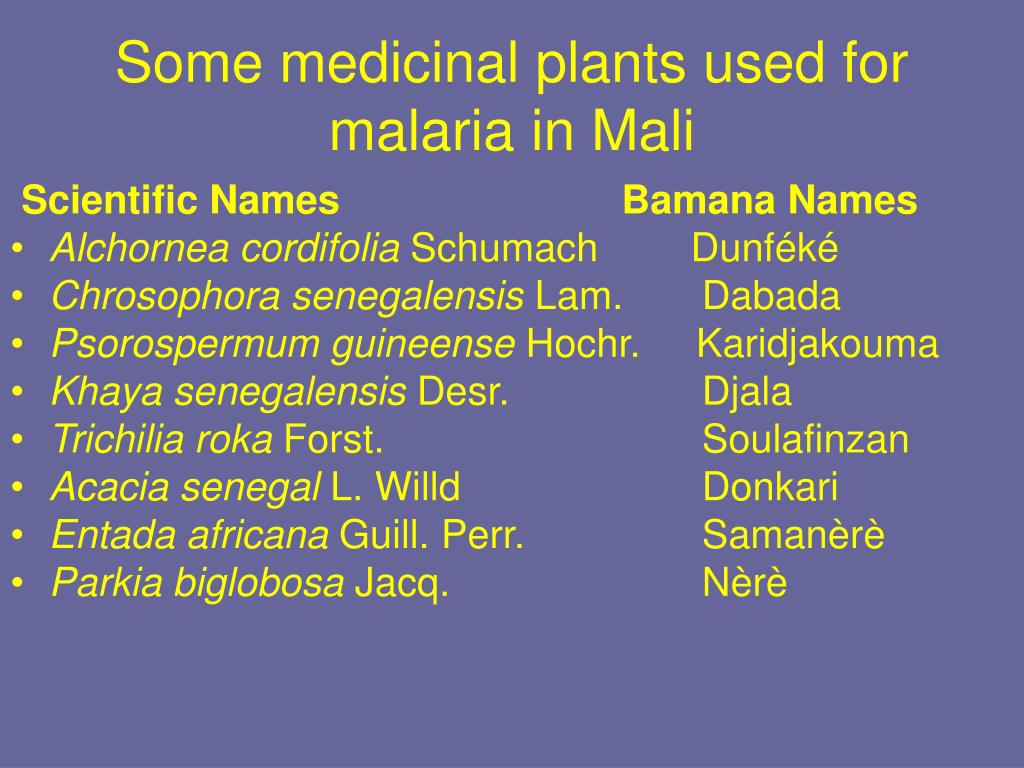 Some medicinal plants used for malaria in Mali