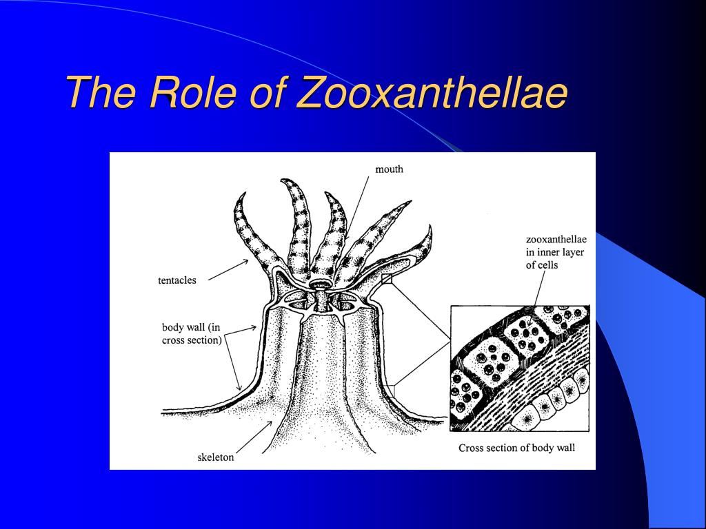 The Role of Zooxanthellae