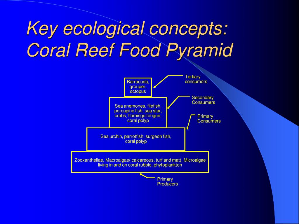 Key ecological concepts: